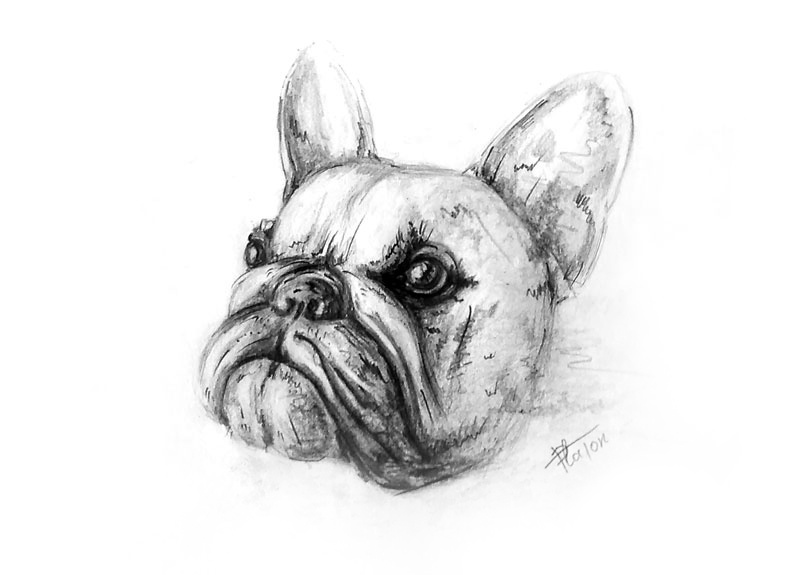Platon Nikolayevich Starodubov. Bulldog