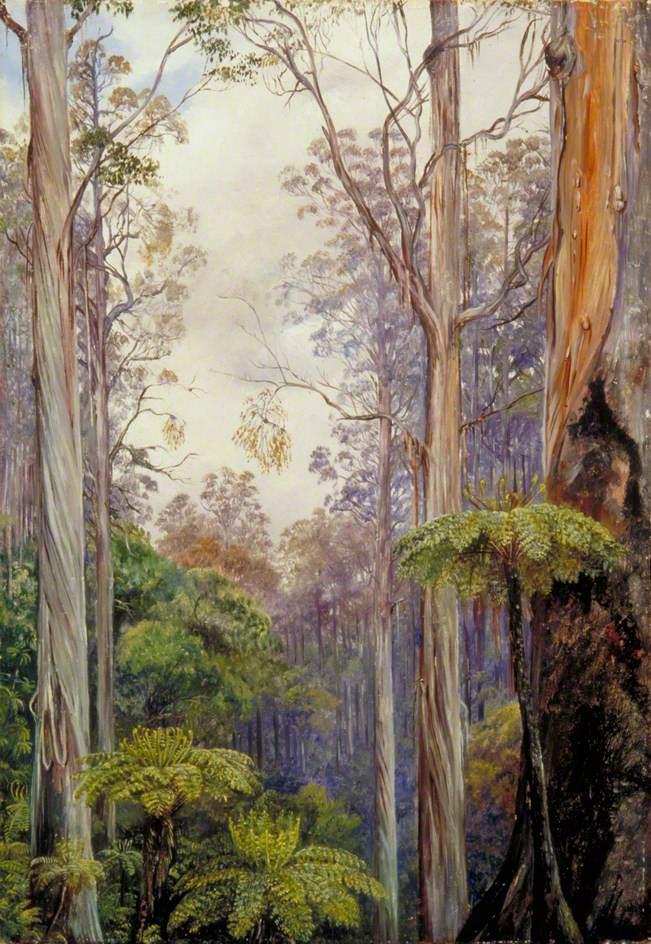 Marianna North. Eucalyptus and Ferns, Victoria, Australia