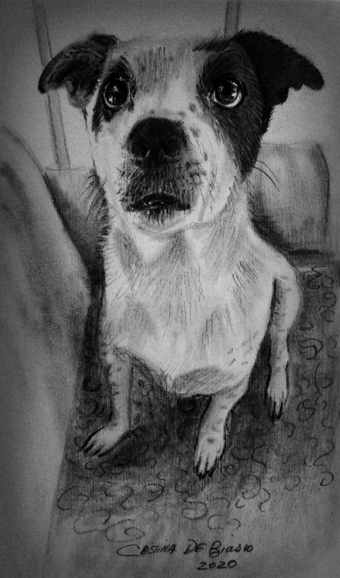 Cristina de biasio. Dog