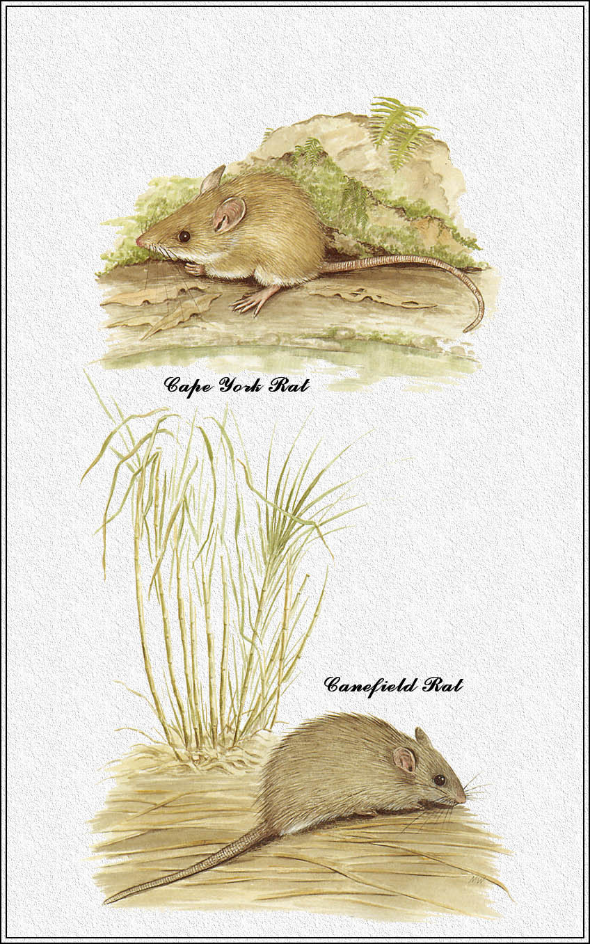 Marion Westmacott. Australian mammals 70