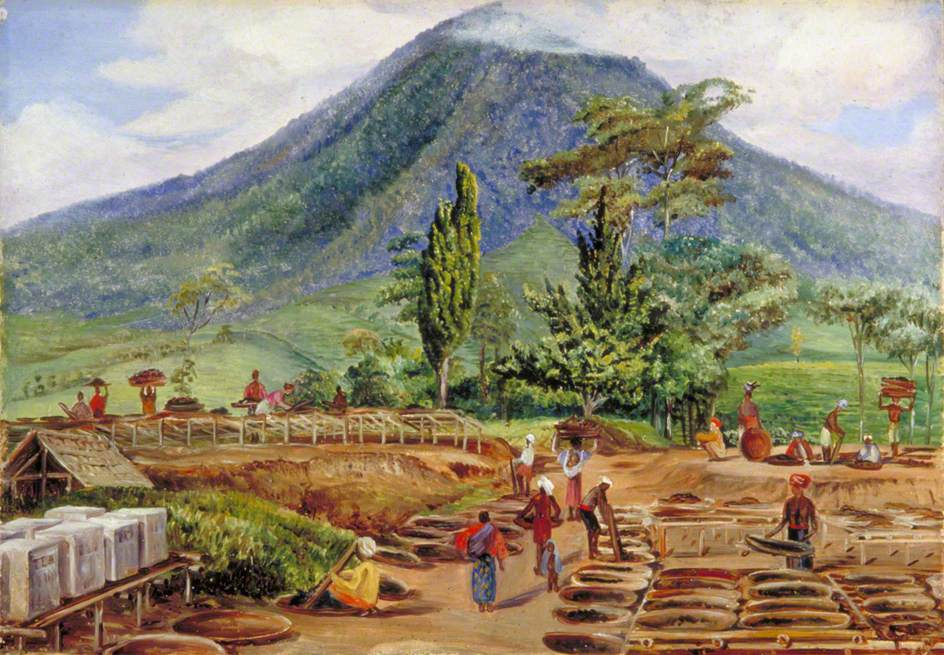 Marianna North. Drying tea leaves, Java
