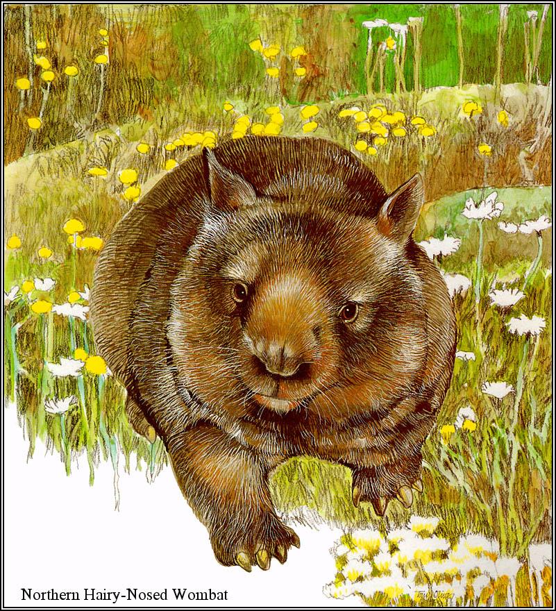Тони Оливер. Австралийские вымирающие виды 14