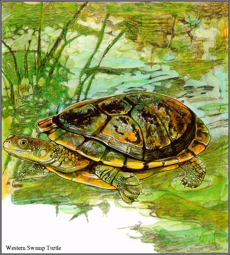 Тони Оливер. Австралийские вымирающие виды 28