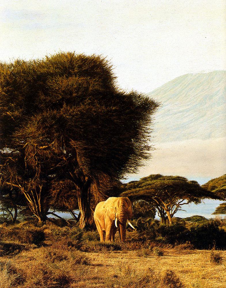 Simon Comb. Morning Kilimanjaro