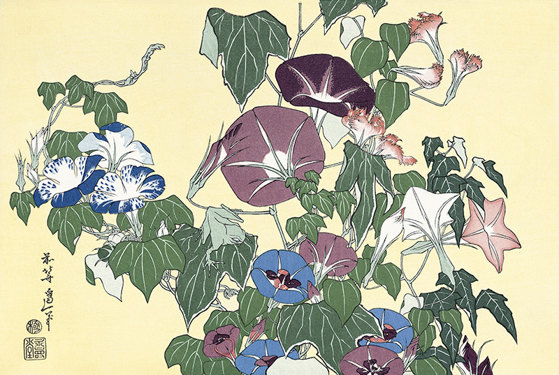 Кацусика Хокусай. Ипомеи и древесная лягушка