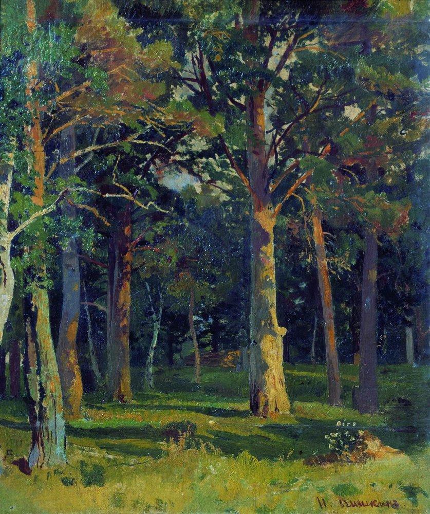 Ivan Shishkin. Forest, pine trees