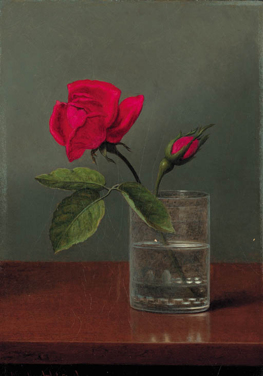 Martin Johnson Head. Red rose with bud