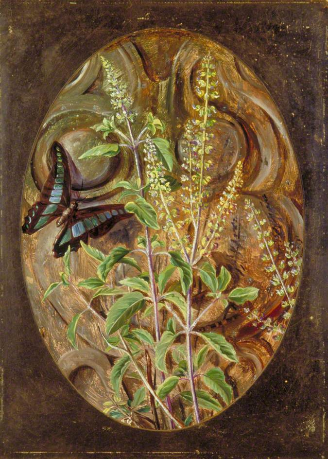 Marianna North. Basil and butterfly