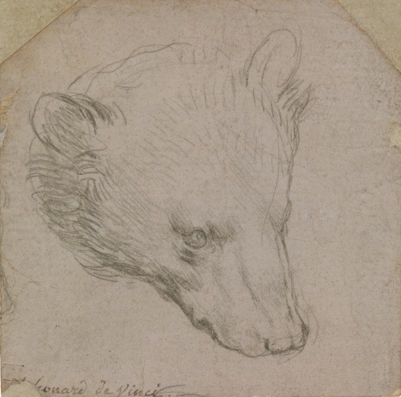 Леонардо да Винчи. Голова медведя