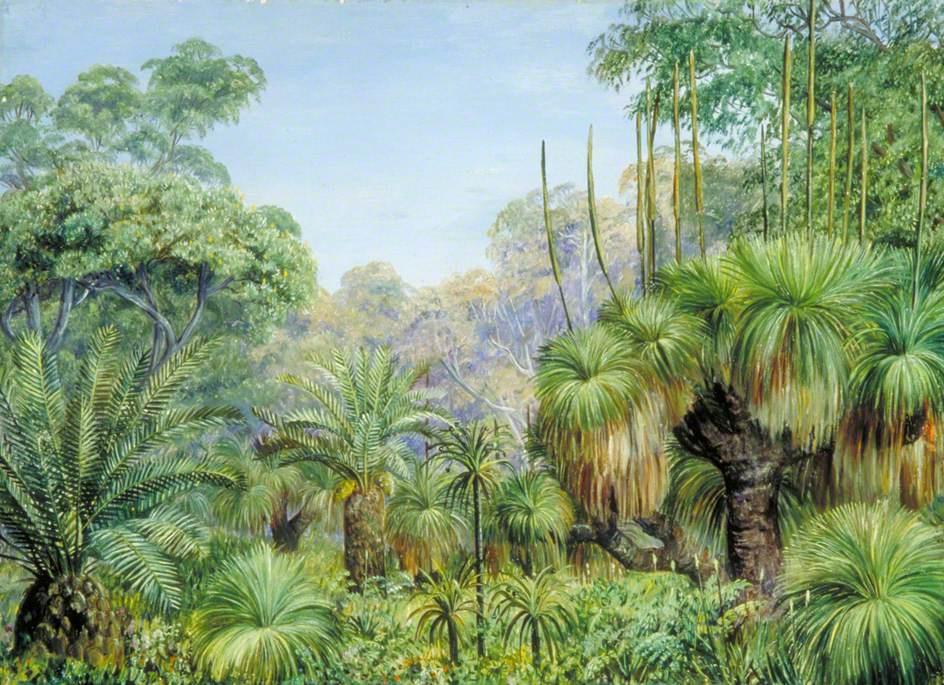 Marianna North. Forest landscape in Western Australia