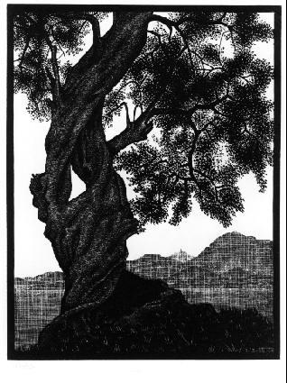 Мауриц Корнелис Эшер. Старое дерево