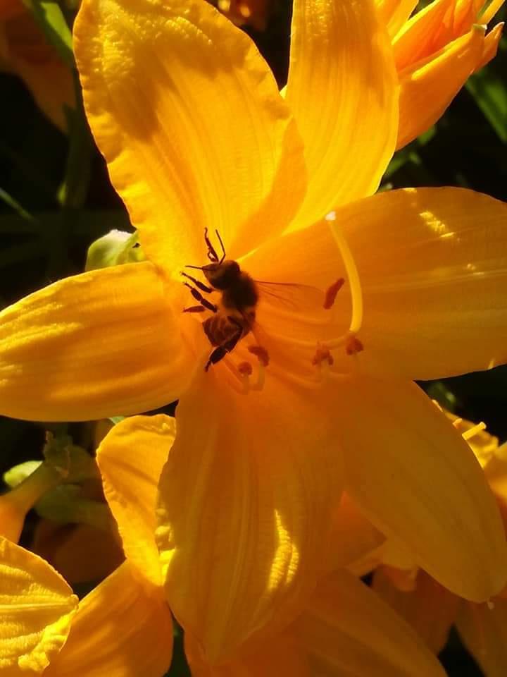Natalya Garber. Honey plant
