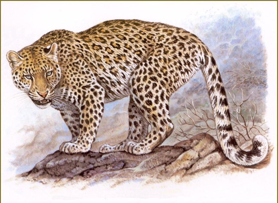 Robert Dallet. Persian leopard