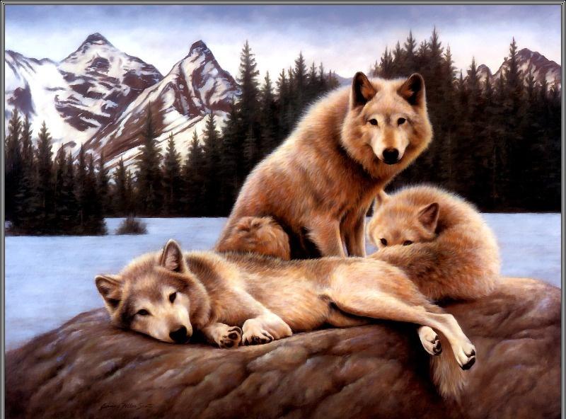 Жанна Филлер Скотт. Лесные волки