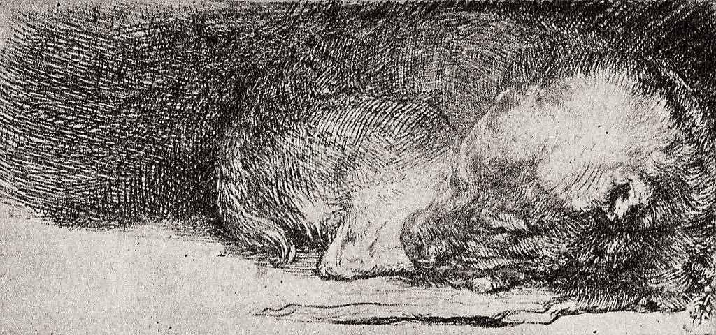 Рембрандт Ван Рейн. Спящая собака