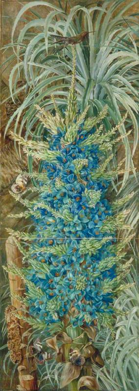 Marianna North. Blue Puya, Hummingbird and Butterfly, Chile