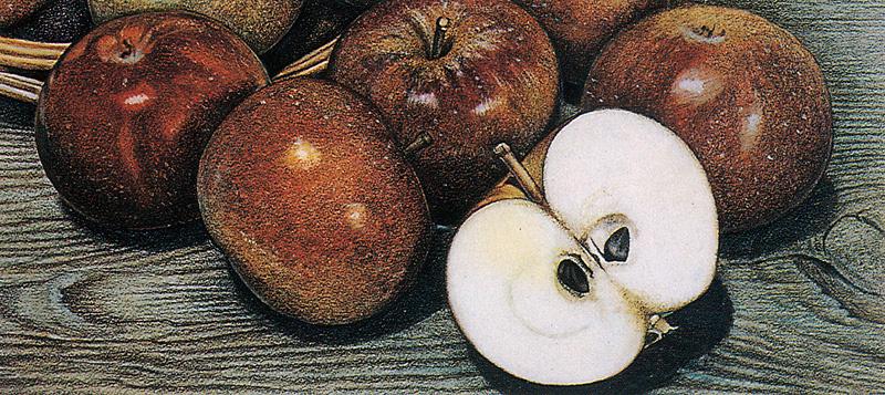 Кирк Колдуэлл. Спелые яблоки