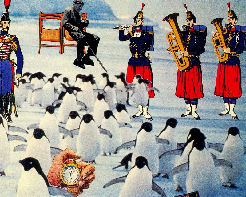 Ампаро Сегарра. Пингвины