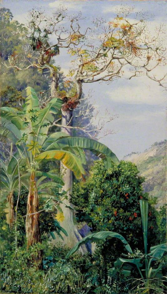 Marianna North. Huge Cottonwood, Jamaica