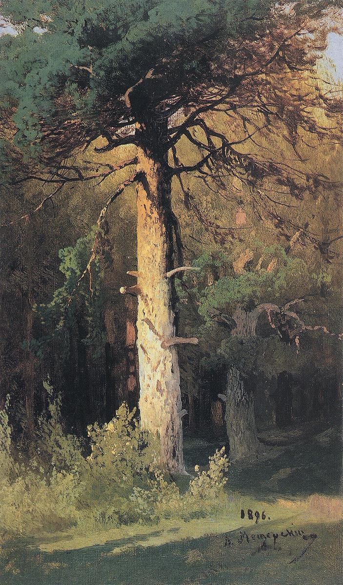Arseniy Ivanovich Meshchersky. Pine. Etude