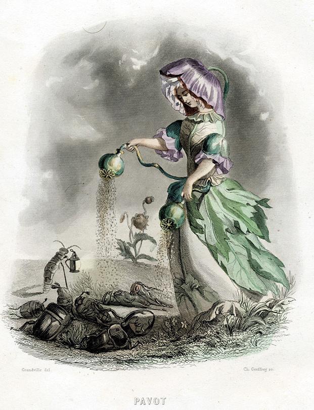 "Jean Inias Isidore (Gerard) Granville. Poppy. The series ""Animate Flowers"""