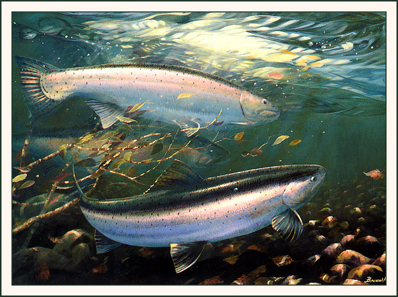 Брюс Мьюир. Рыбы