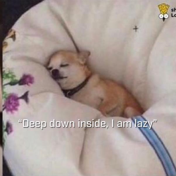 Đỗ Ngọc Ánh. Chú Chó Đáng Yêu Đang Nằm  Trên Một Chiếc Gối Ngủ Ngon