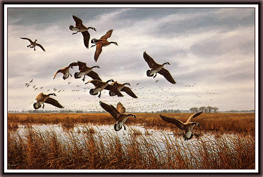 David Maass. Nasty weather - canadian geese