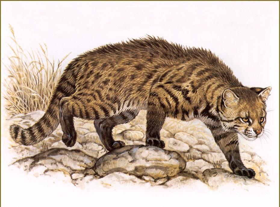 Robert Dallet. Panasova cat