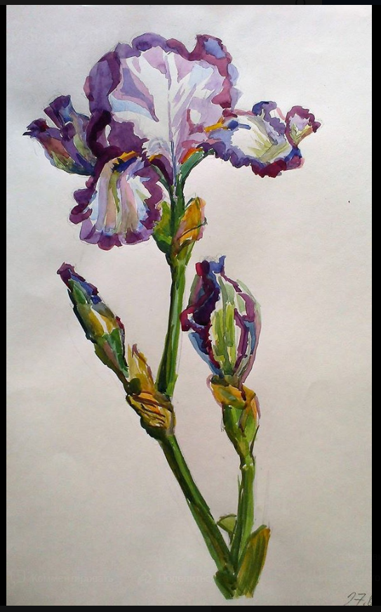 Lilia Georgievna Evsyukova. Royal iris