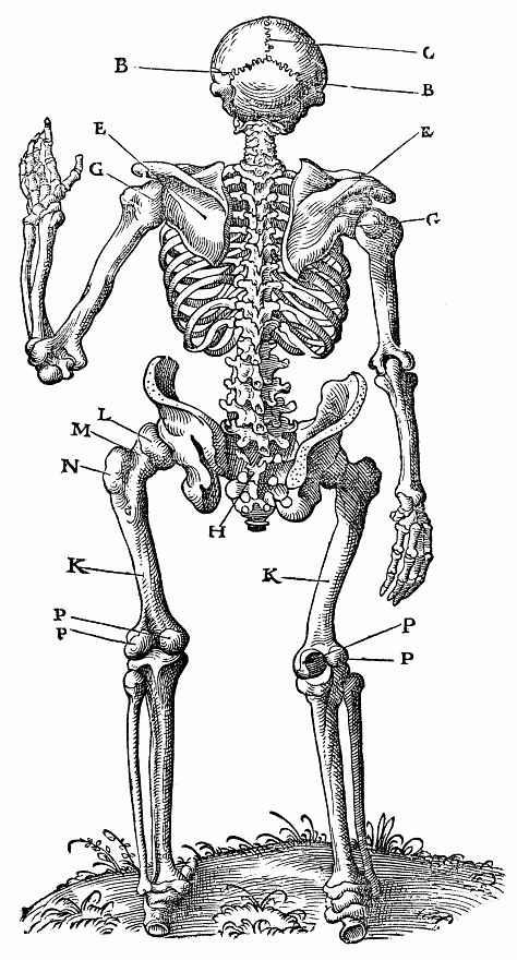 Ханс Бальдунг. Стоящий скелет