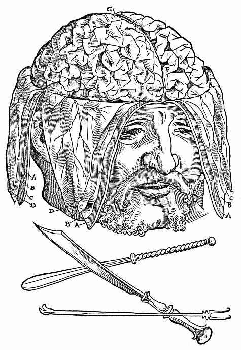 Ханс Бальдунг. Мужская голова с обнаженными извилинами головного мозга