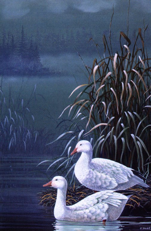 Gerald Trudel. Two swans