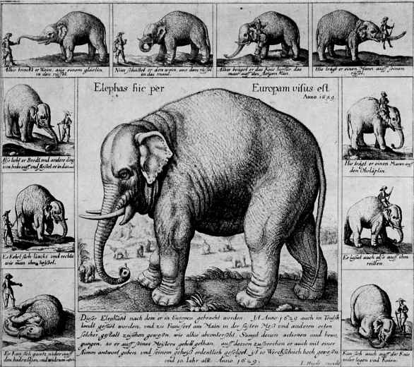 Венцель Холлар. Слон