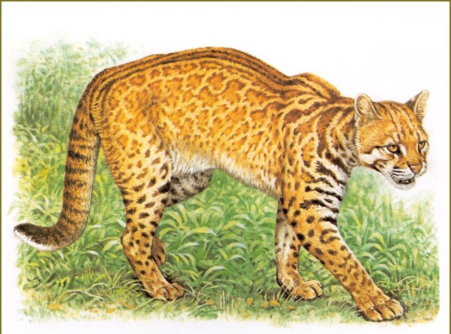 Robert Dallet. Cat Tamminga