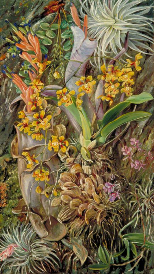 Marianna North. Epiphytal Orchid Group, Brazil
