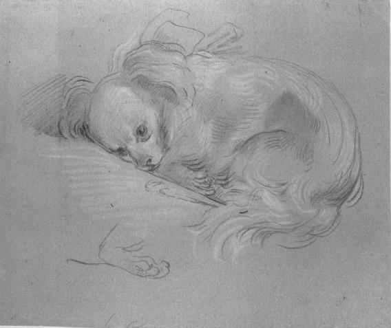 Thomas Gainsborough. Spaniel puppy