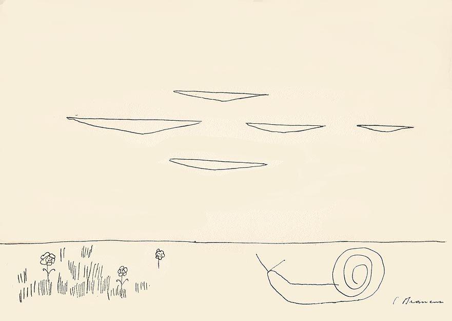 "Constantine Brancusi. Illustration for ""Plants and animals"""
