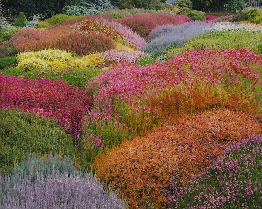 Christopher Burkett. Summer in Heather Gardens, California