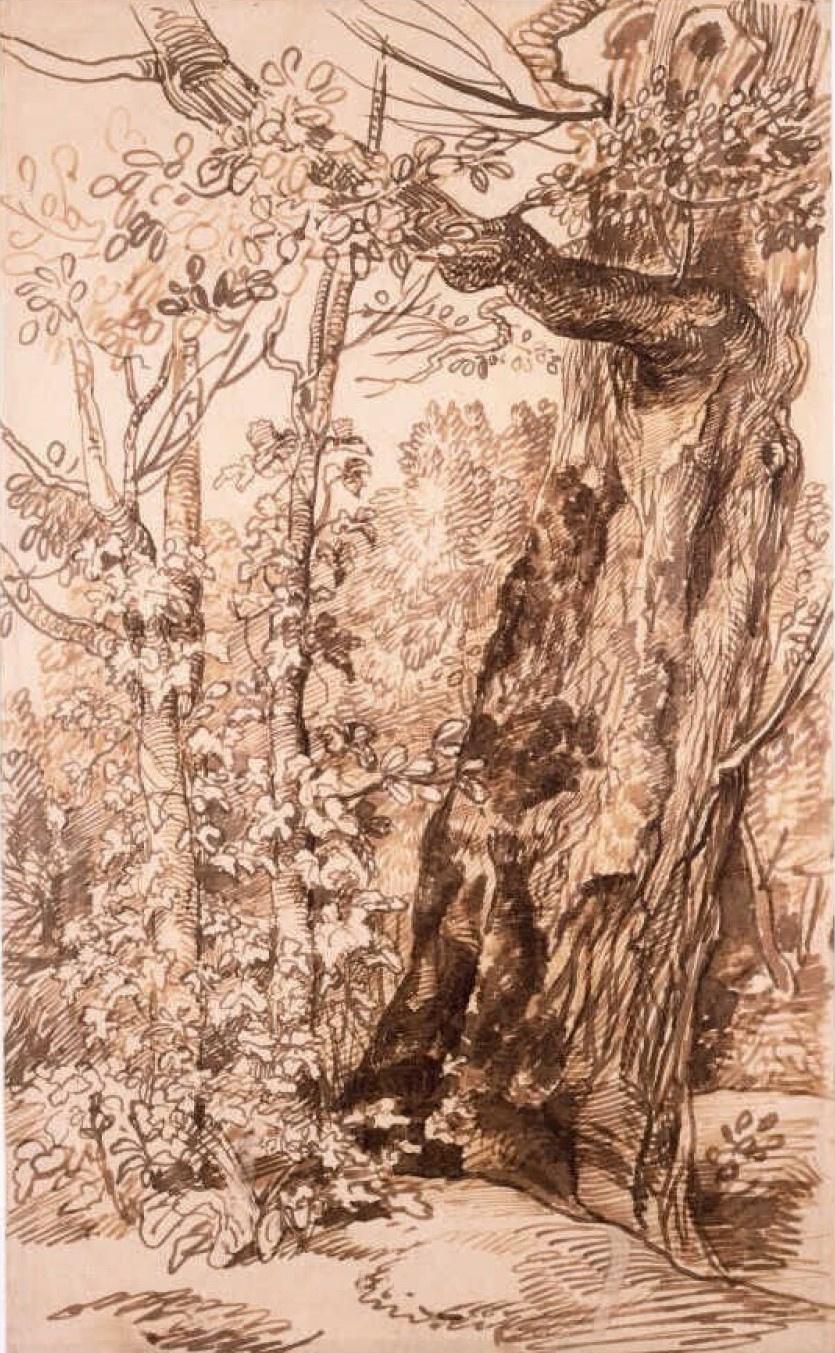 Jan Lievens. Landscape with big tree