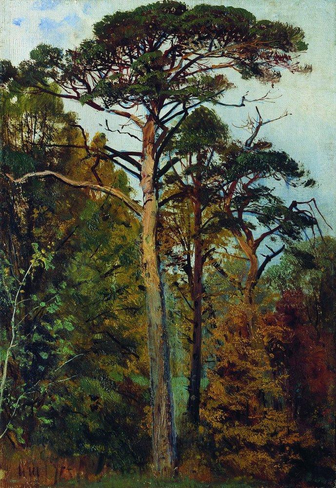 Ivan Shishkin. Pine