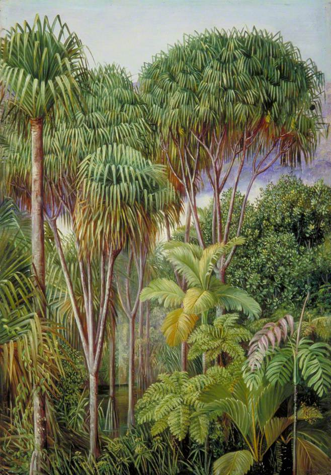 Marianna North. Pandanas, palm trees and cinnamon trees on the hills in Mahe