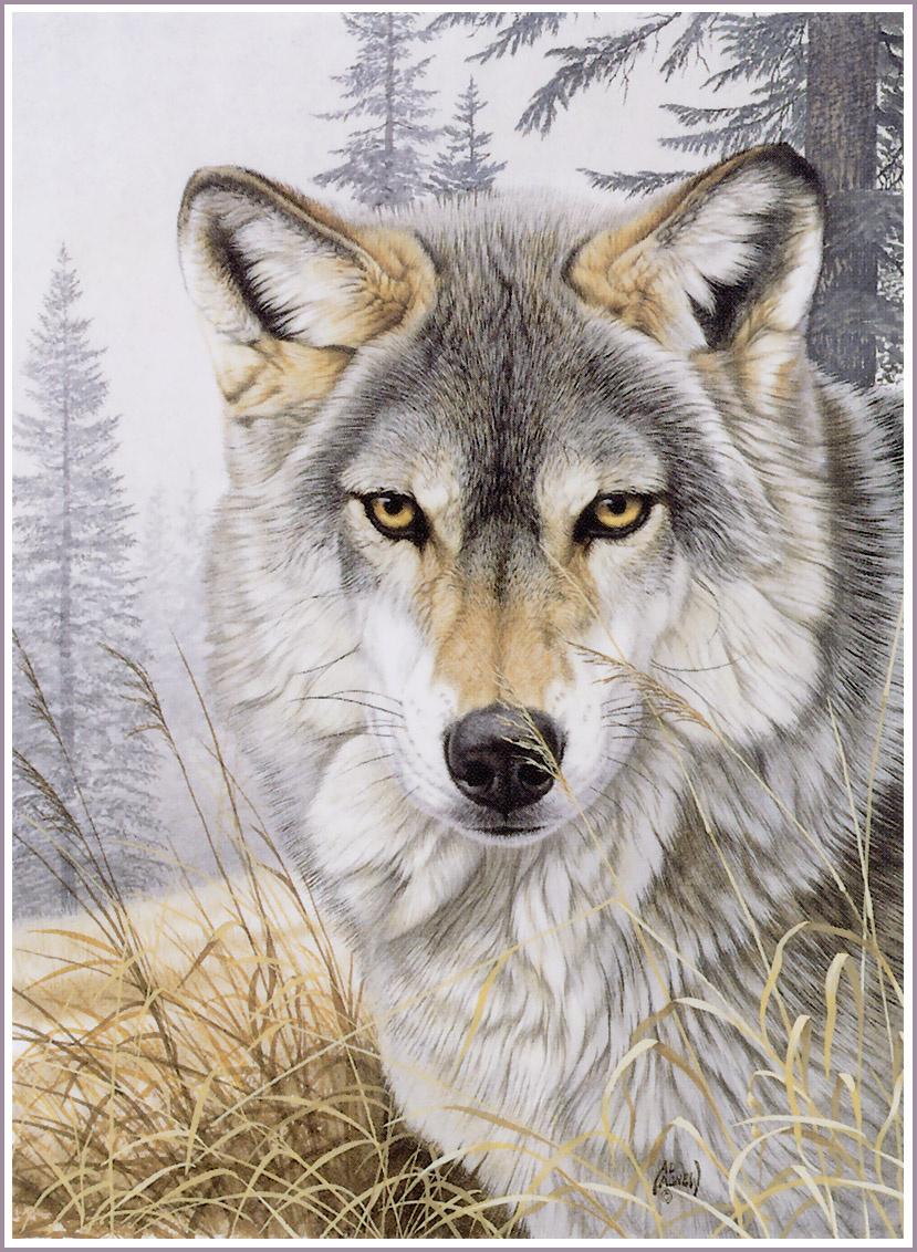 Открытки, открытки и картинки с волками