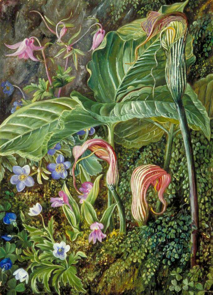 Marianna North. Himalayan flowers and ferns