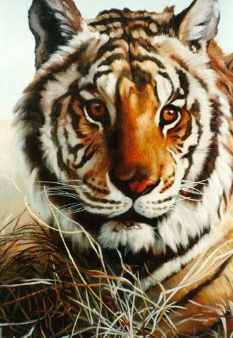 Дональд Руст. Тигр