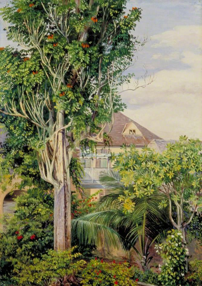 Марианна Норт. Сад королевского дома Испании, Ямайка