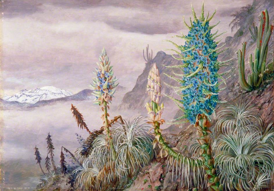 Marianna North. Blue pushes and cacti in the Cordillera, Chile