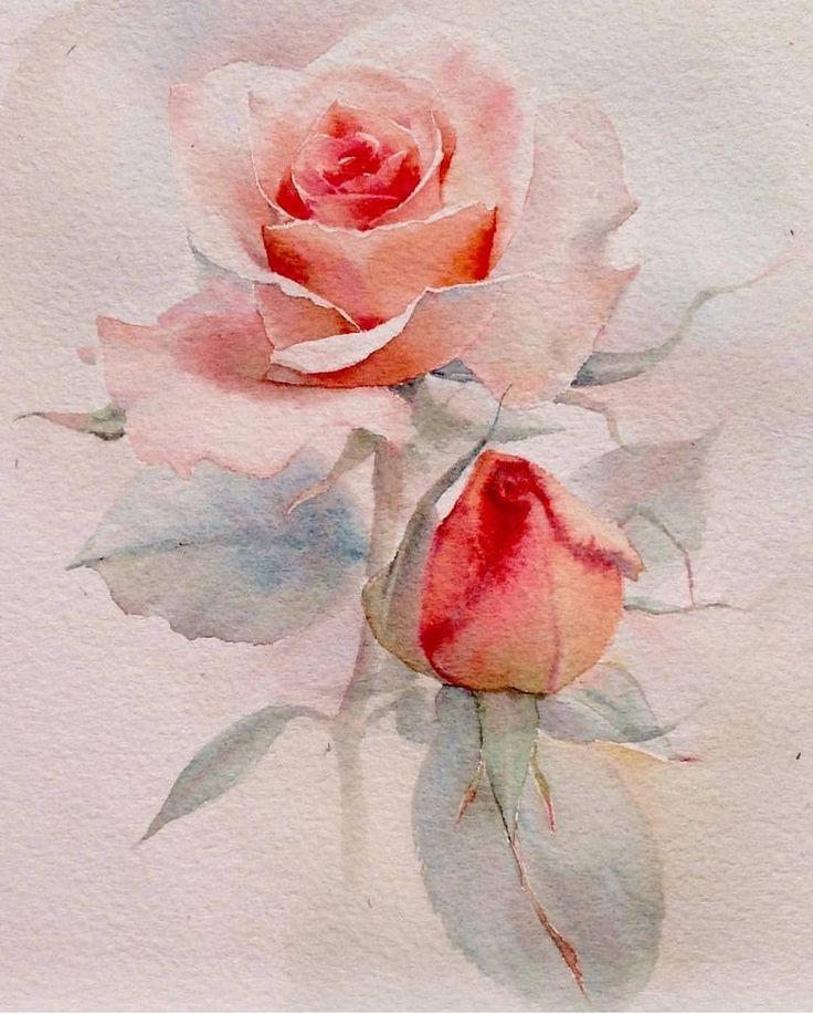 Tais. Rose flower