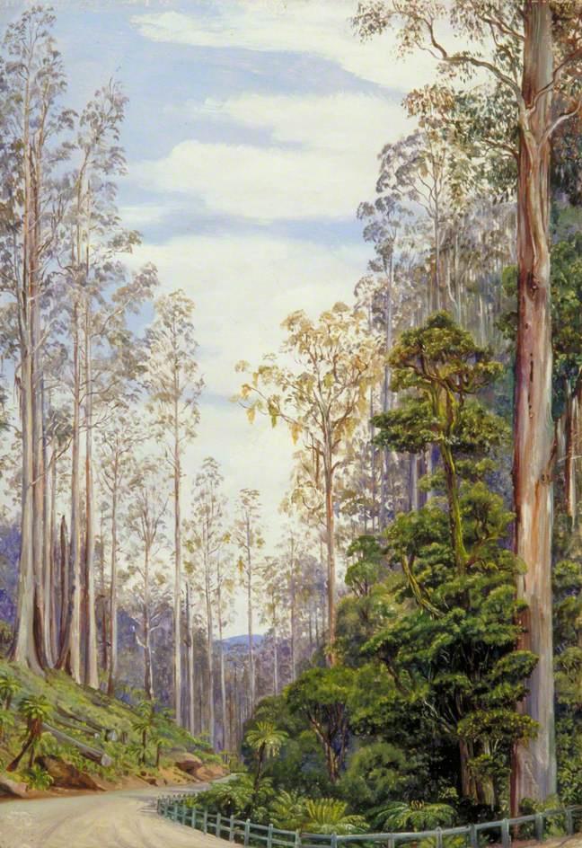 Марианна Норт. Дорога через лес, Ферншо, Виктория, Австралия