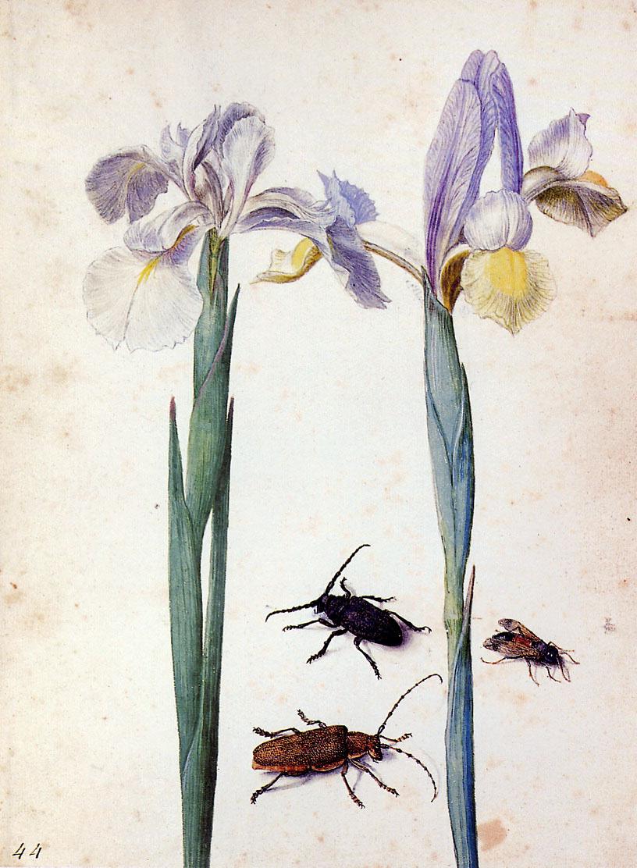 Georg Flegel. Two flowers and flies